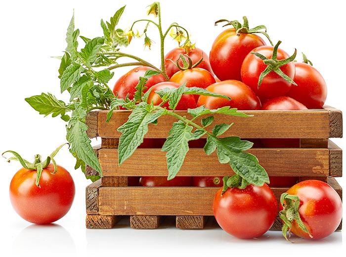 Tomato-image