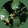 Aquatics_emergent-plants