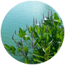 Aquatics_pond-weeds