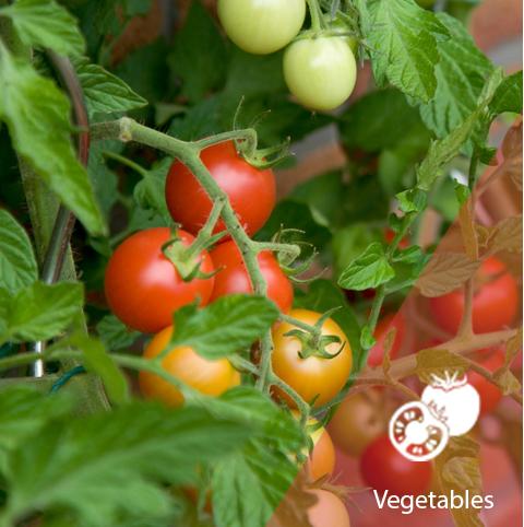 Vegetable Crops - Fastest Growing Vegetable Business